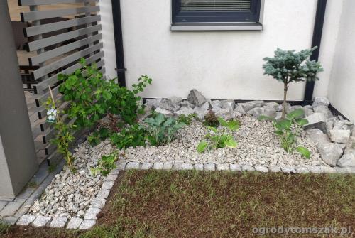2020 ogrody tomszak maly ogrodek osiedle karpackie 4