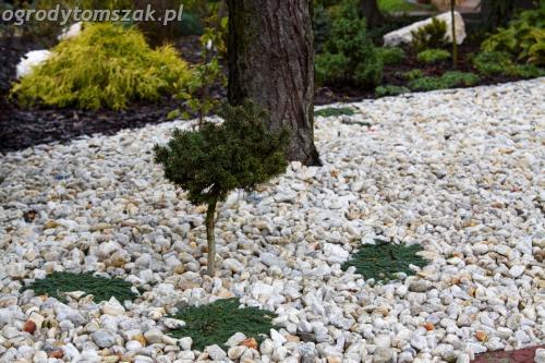 ogrod Bielsko Biala Mazancowice wejscie do domu rabata przed domem IMG 1093
