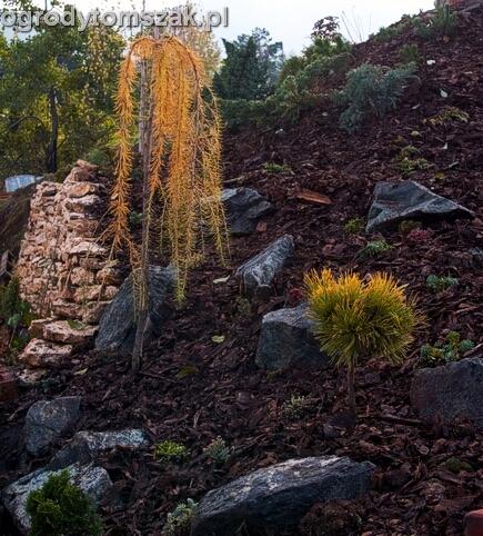 ogrod Kozy Bielsko-Biala Pisarzowice mur oporowy wapien skarpa w ogrodzie skarpa021