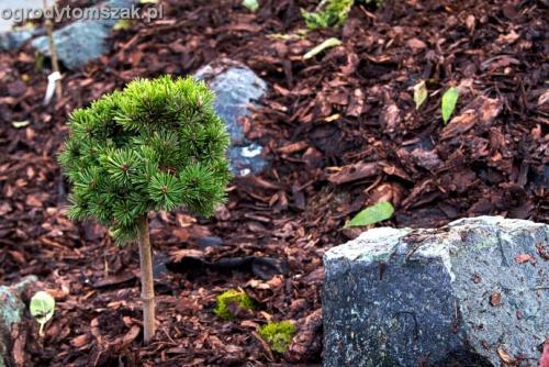 ogrod Kozy Bielsko-Biala Pisarzowice mur oporowy wapien skarpa w ogrodzie skarpa023