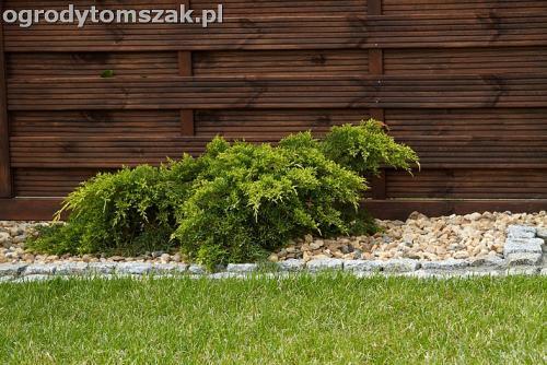 ogrod bielsko biala trawnik murek lawki iglaki 2