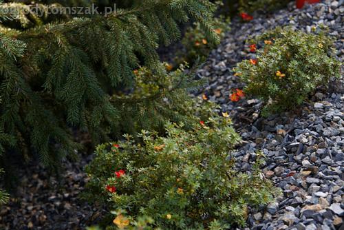 ogrod bystra obrzeze palstikowe trawnik plyty betonowe 05