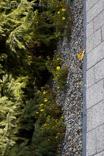 ogrod bystra obrzeze palstikowe trawnik plyty betonowe 06