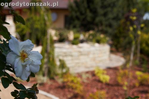 ogrod kozy oczko wodne kaskada grill ogrodowyIMG 5056