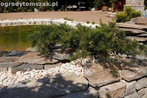 ogrod kozy oczko wodne kaskada grill ogrodowyIMG 5065
