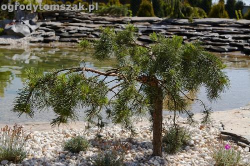 ogrod kozy oczko wodne kaskada grill ogrodowyIMG 5083
