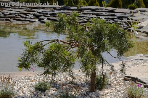 ogrod kozy oczko wodne kaskada grill ogrodowyIMG 5084