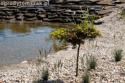 ogrod kozy oczko wodne kaskada grill ogrodowyIMG 5085