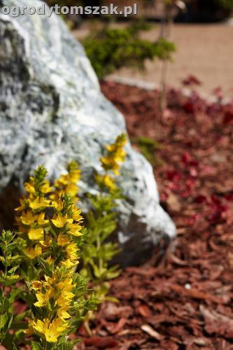 ogrod kozy oczko wodne kaskada grill ogrodowyIMG 5096