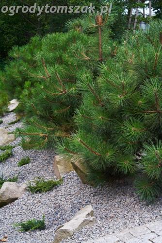 ogrod lipnik bielsko-biala ogrod monochromatyczny ogrod zielony IMG 7986
