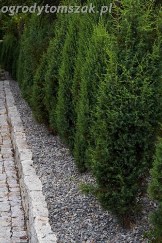 ogrod lipnik bielsko-biala ogrod monochromatyczny ogrod zielony IMG 7987