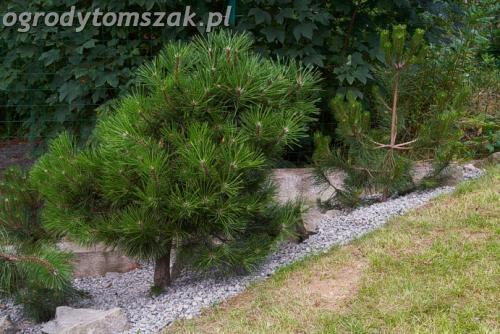 ogrod lipnik bielsko-biala ogrod monochromatyczny ogrod zielony IMG 7993