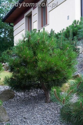 ogrod lipnik bielsko-biala ogrod monochromatyczny ogrod zielony IMG 8000