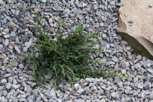 ogrod lipnik bielsko-biala ogrod monochromatyczny ogrod zielony IMG 8003