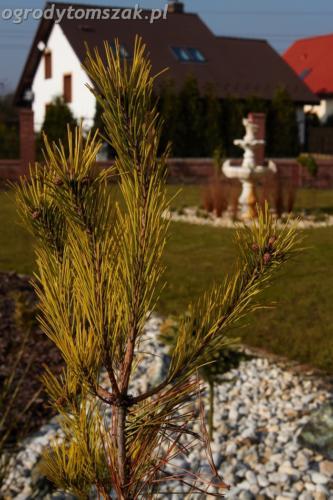 ogrod mazancowice bielsko biala zdjecie zdjecia projektowanie system nawadniajacyIMG 1184