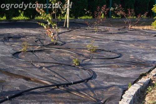 ogrod mazancowice bielsko biala zdjecie zdjecia projektowanie system nawadniajacyIMG 6904