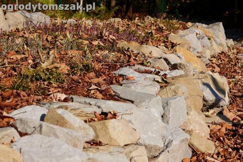 ogrod nowoczesny bystra piaskowiec trawnik lasIMG 5855