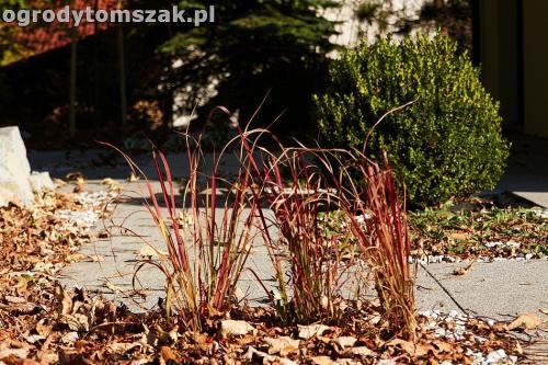 Bystra - ogród w cieniu lasu