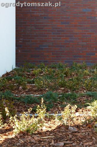 ogrod nowoczesny bystra piaskowiec trawnik lasIMG 5868