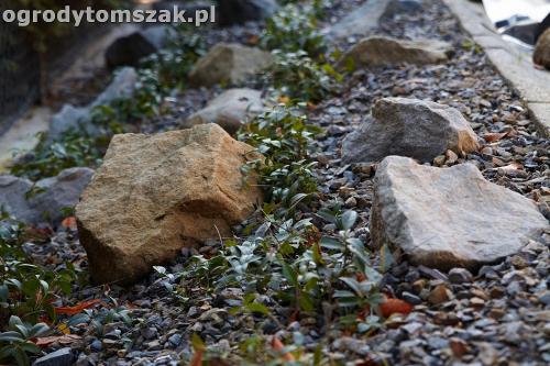 ogrod nowoczesny bystra piaskowiec trawnik lasIMG 5882