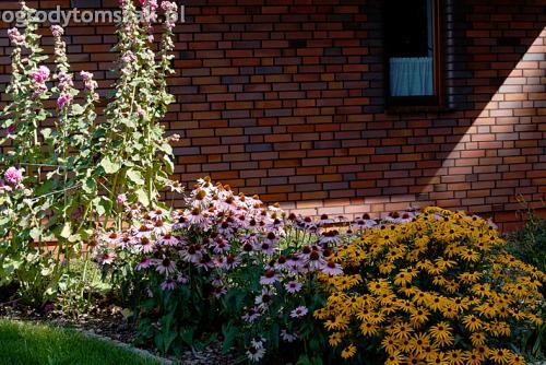 ogrod pod lasem komorowice krakowskie nawodnienie bruk oswietlenie ogrodu 10