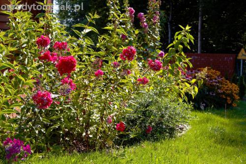 ogrod pod lasem komorowice krakowskie nawodnienie bruk oswietlenie ogrodu 11