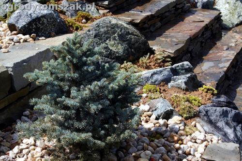ogrod taras ziemny skalniak schody IMG 5498