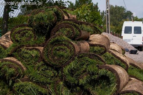ogrod trawnik z rolki trawnik rolowany Czechowice-Dziedzice012
