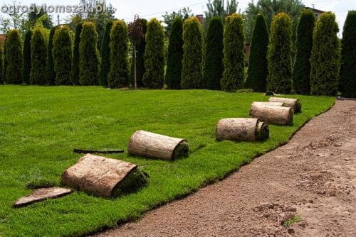 ogrod trawnik z rolki trawnik rolowany Czechowice-Dziedzice013