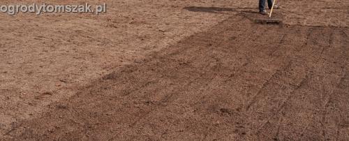 ogrod trawnik z siewu trawnik siany siatka przeciw kretom Tychy 006