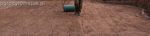 ogrod trawnik z siewu trawnik siany siatka przeciw kretom Tychy 008