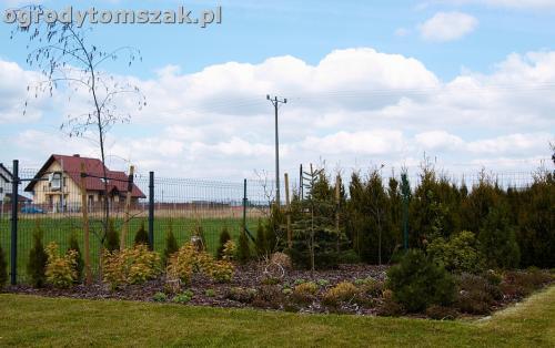 ogrod zory rosliny tomszak nowoczesny IMG 4477