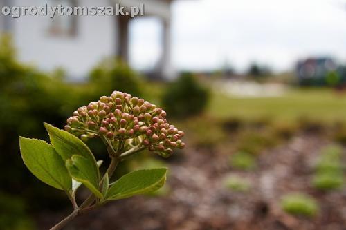 ogrod zory rosliny tomszak nowoczesny IMG 4478