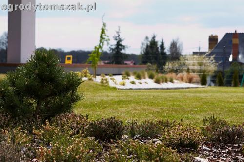 ogrod zory rosliny tomszak nowoczesny IMG 4480
