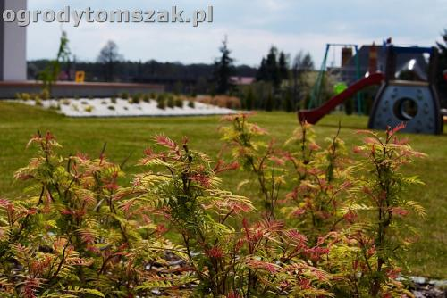ogrod zory rosliny tomszak nowoczesny IMG 4481