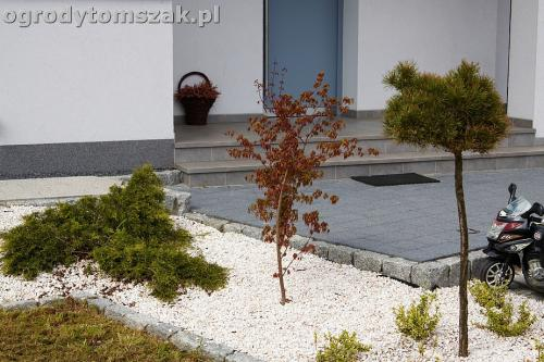 ogrod zory rosliny tomszak nowoczesny IMG 4483