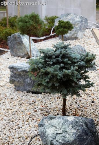 ogrod zywiec lesna projektowanie trawnik rosliny ogrodnik IMG 7797