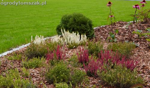 ogrod zywiec lesna projektowanie trawnik rosliny ogrodnik IMG 8018