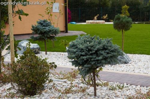 ogrod zywiec lesna projektowanie trawnik rosliny ogrodnik IMG 8033