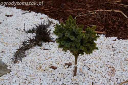 ogrody tomszak Lipnik Bielsko Biala oczko wodne woda w ogrodzie kaskada 04