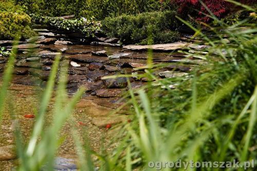 ogrody tomszak kozy trawnik oczko wodne obsadzanieIMG 7882