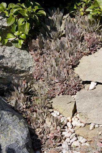 ogrody tomszak kozy trawnik oczko wodne obsadzanieIMG 7884