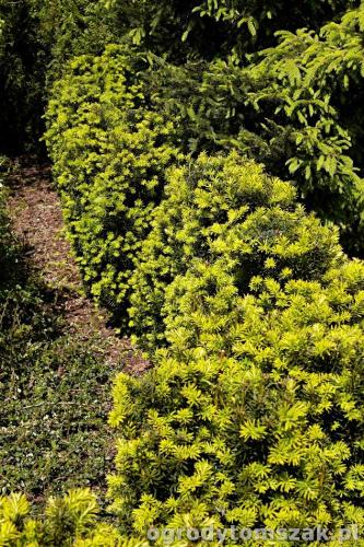 ogrody tomszak kozy trawnik oczko wodne obsadzanieIMG 7900