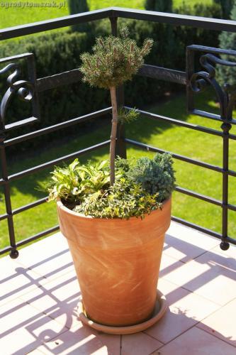 ogrody tomszak taras balkon008