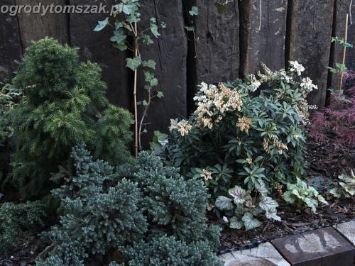 ogrody tomszak wodzislaw014