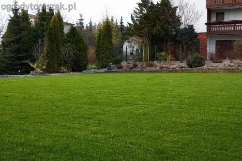ogrodytomszak buczkowice trawnik mur nawodnienie 01