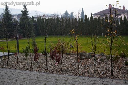 ogrodytomszak bystra trawnik obsadzanie ogrodu 01