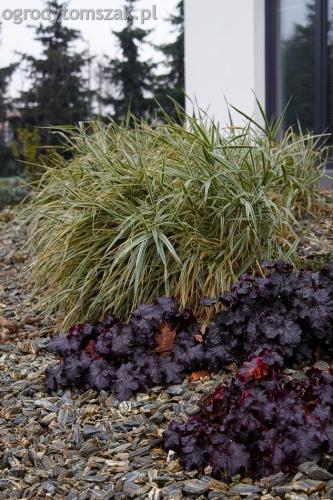 ogrodytomszak bystra trawnik obsadzanie ogrodu 08