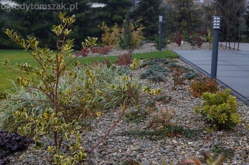 ogrodytomszak bystra trawnik obsadzanie ogrodu 10