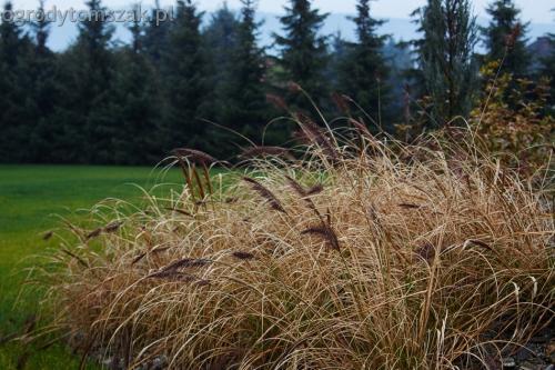 ogrodytomszak bystra trawnik obsadzanie ogrodu 11